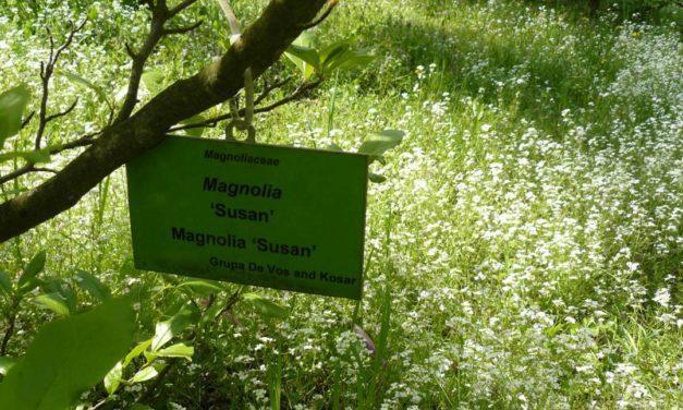 Dendrologi – Ilmu Tentang Pohon