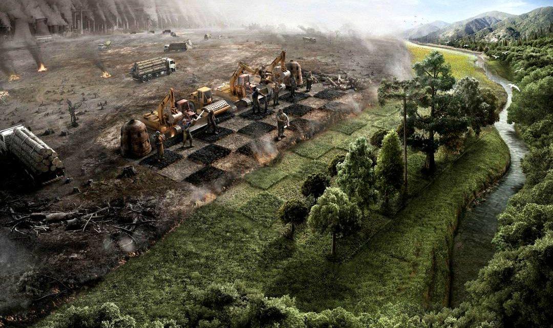 Polemik Hutan Adat di Indonesia