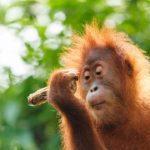Taman Nasional Kutai - Kondisi Alam, Flora Fauna & Destinasi Wisata