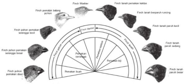 paruh burung finch