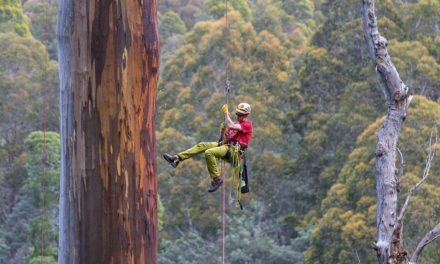 10 Pohon Tertua di Dunia & 1 Pohon di Indonesia