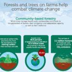 Infografis - Cara Hutan Melawan Perubahan Iklim
