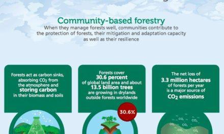 Infografis – Cara Hutan Melawan Perubahan Iklim