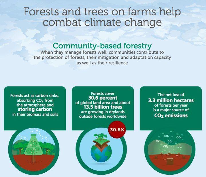 Cara Hutan Melawan Perubahan Iklim