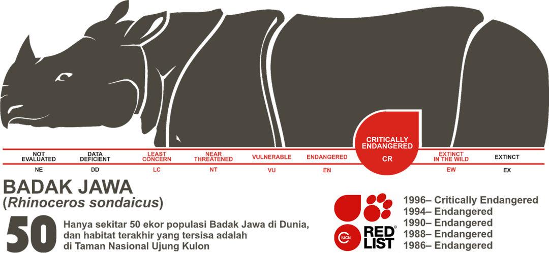 Infografis Populasi Badak Jawa