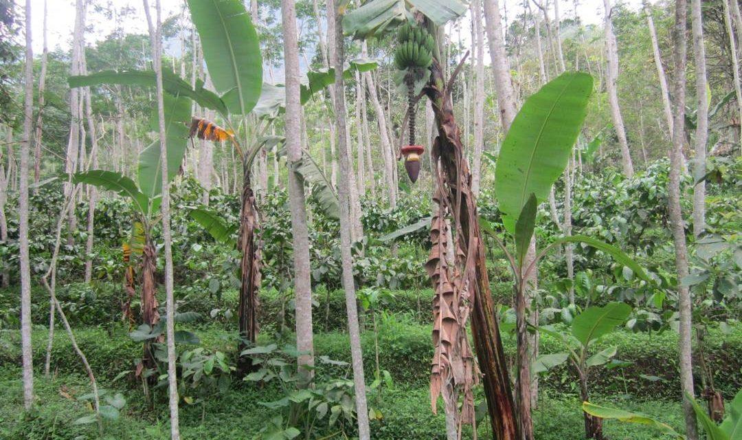 Agroforestri – Pengertian, Manfaat Serta Tujuan