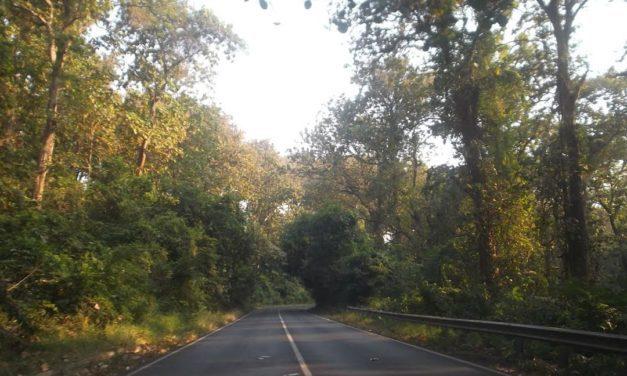 Alas Roban – Hutan Asri Penuh Misteri