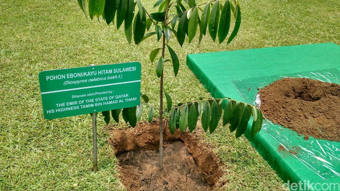 Mengenal Pohon Eboni – Manfaat dan Cara Budidaya