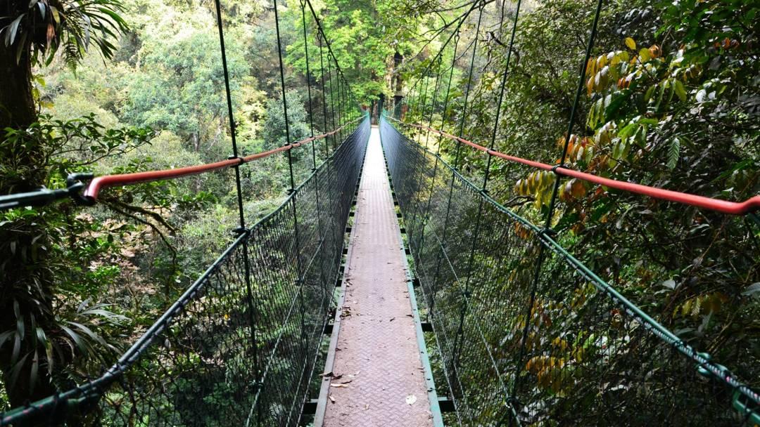 canopy trail pangrango