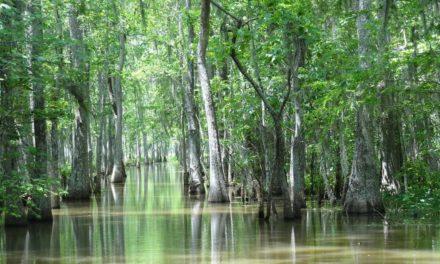 Hutan Bakau – Pengertian, Sebaran, Peran & Kondisi Mangrove