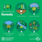 Infografis - 5 Manfaat Hutan Bagi Dunia