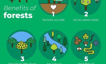 Infografis – 5 Manfaat Hutan Bagi Dunia