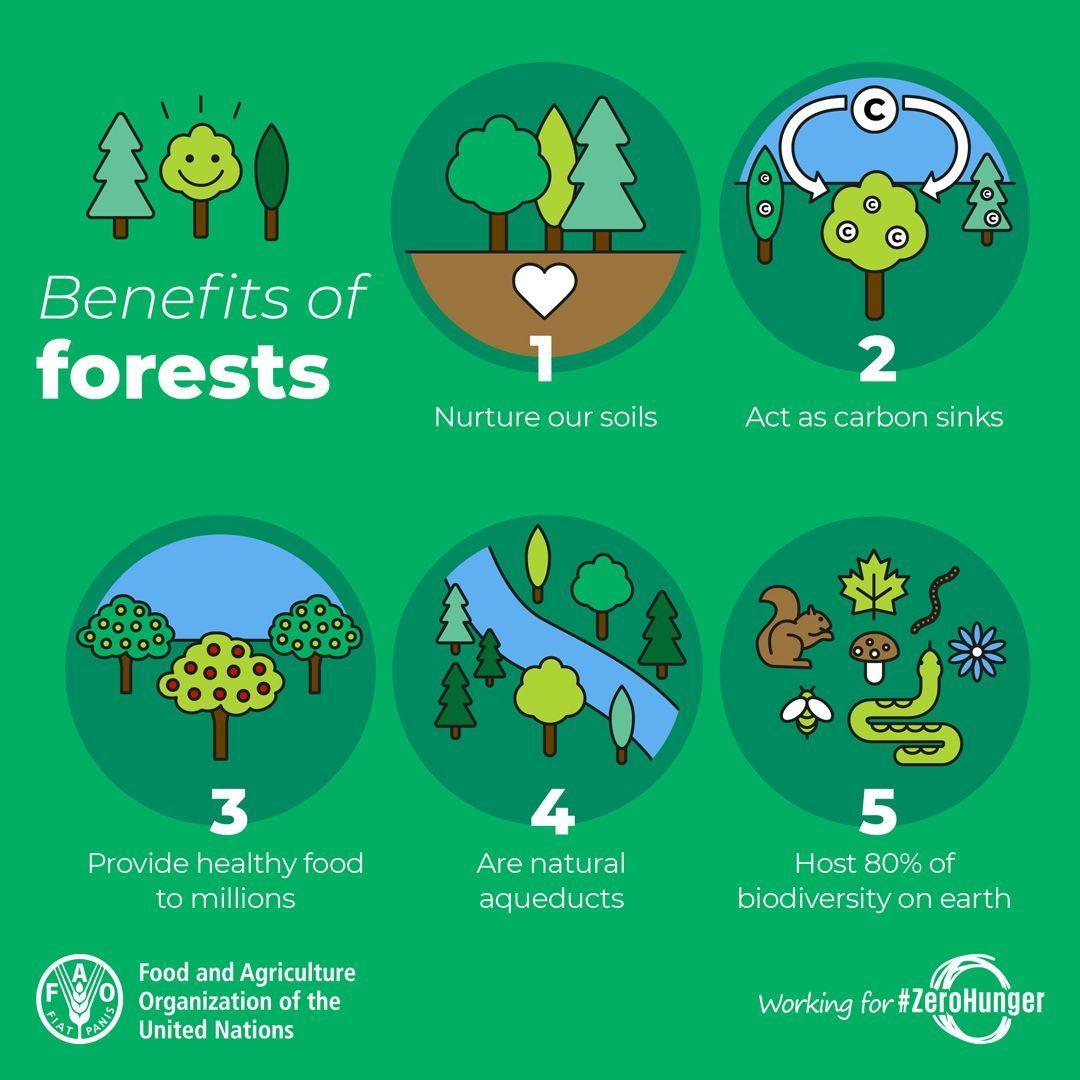 infografis manfaat hutan bagi dunia