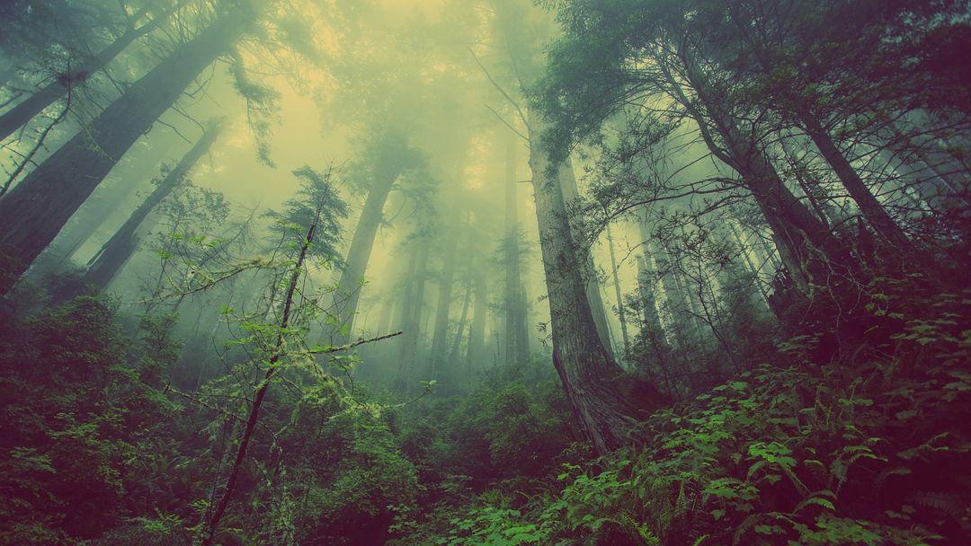 kabut hutan basah