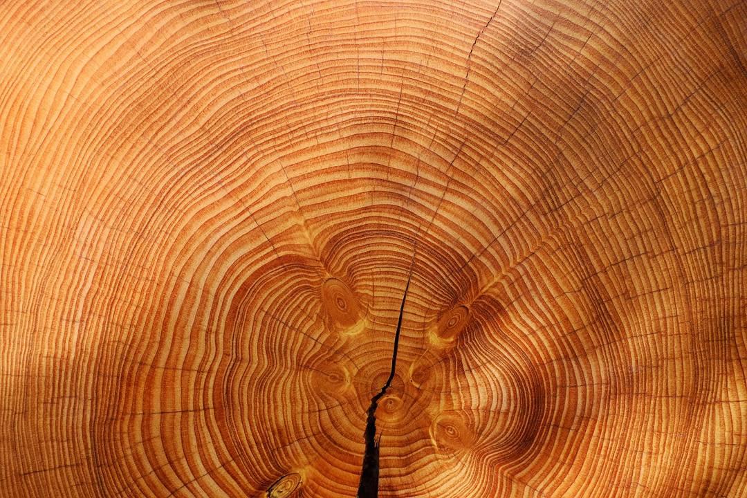 kayu melintang