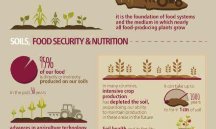 Infografis – Pentingnya Kesuburan Tanah Untuk Kecukupan Pangan