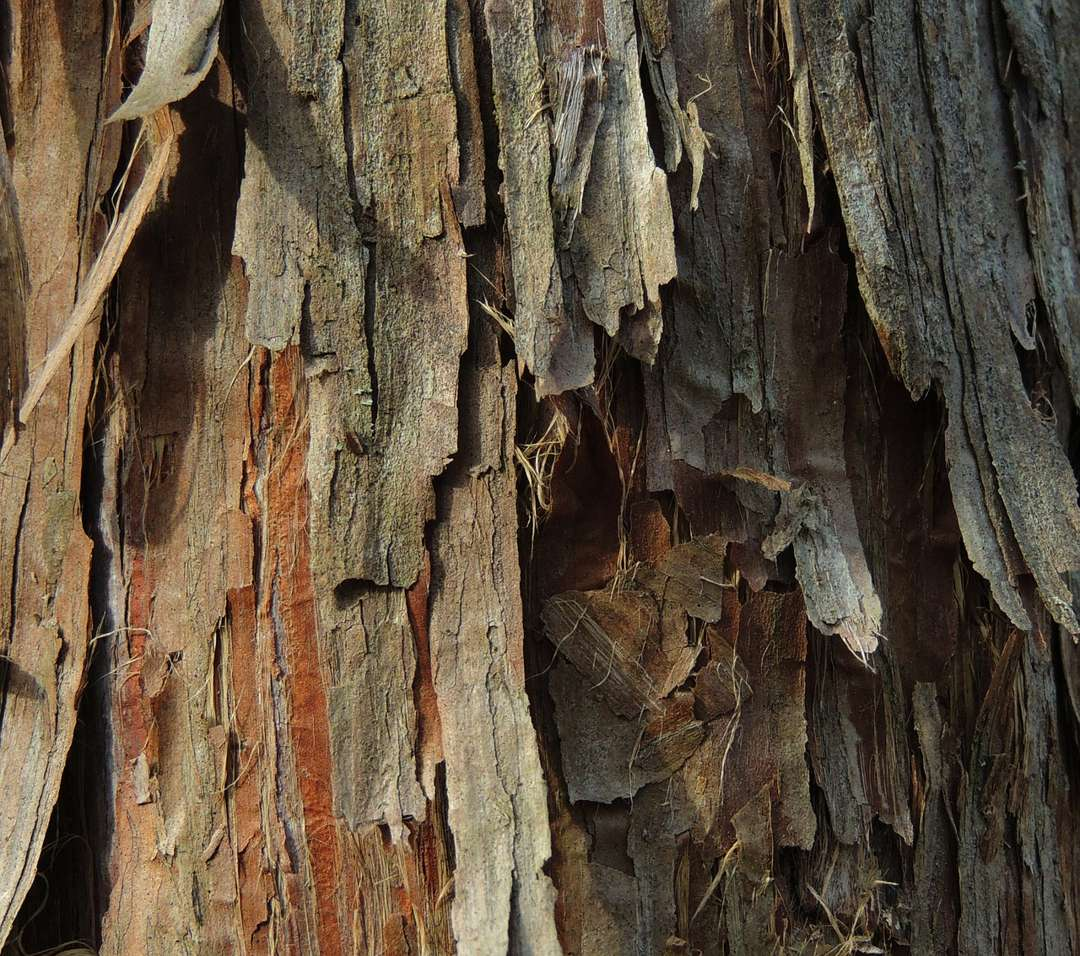 kulit kayu cedar
