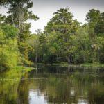 Analisis Vegetasi – Pengertian, Proses dan Tujuan