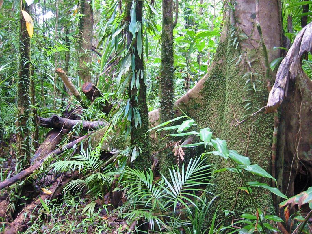 lantai hutan hujan tropis