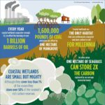 Infografis – Manfaat Hutan Pesisir