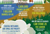 manfaat hutan pesisir