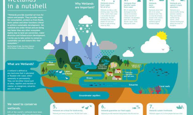 Infografis – 7 Manfaat Lahan Basah