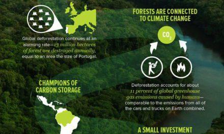 Infografis – Peran Hutan Melawan Perubahan Iklim