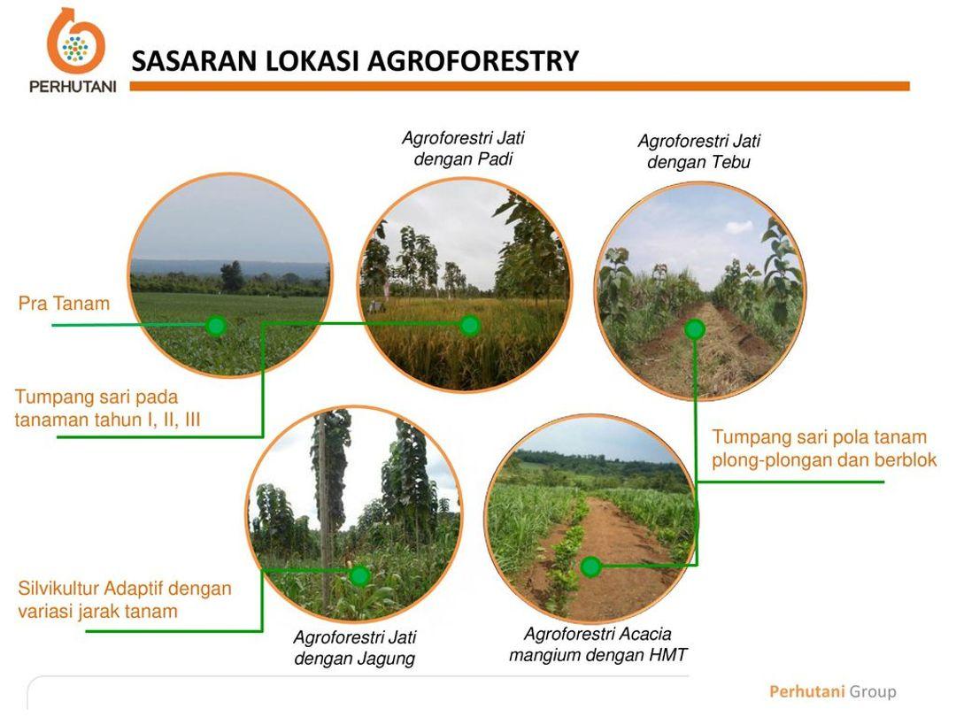 sasaran agroforestri
