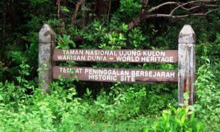 Mengenal Ujung Kulon, Habitat Terakhir Badak Jawa