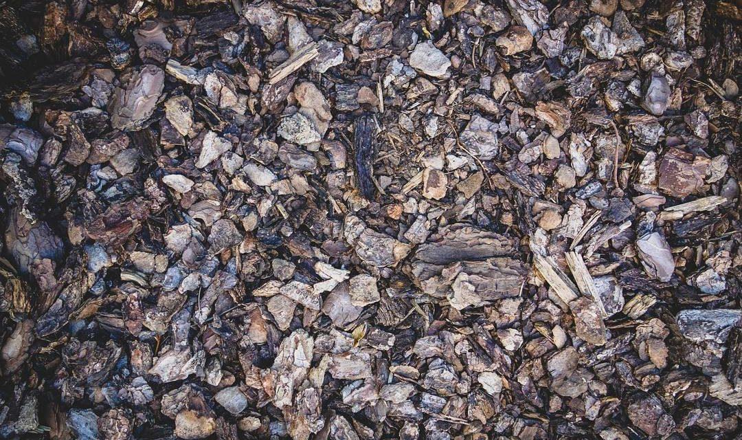 Tanah Humus – Pengertian, Manfaat dan Humufikasi