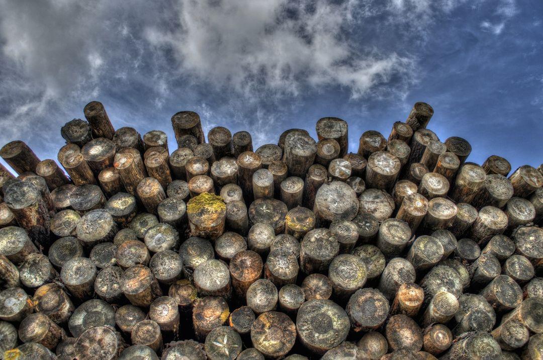 tumpukan batang kayu