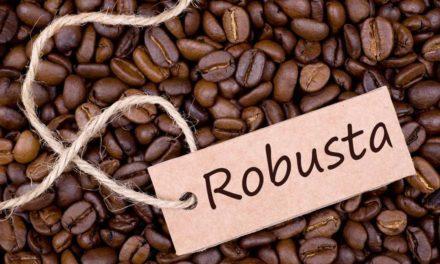 Kopi Robusta – Asal, Klasifikasi, Klon & Perdagangan