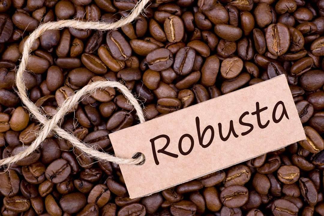 biji kopi robusta
