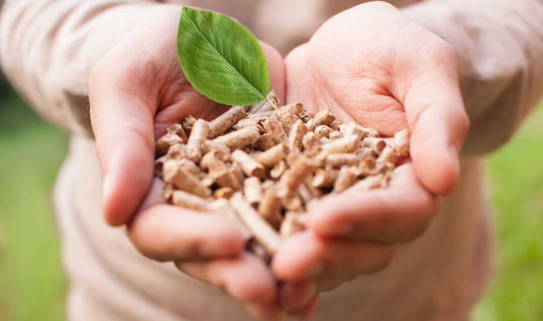 Biomassa – Pengertian, Prinsip, Manfaat & Contoh Energi