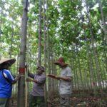 Hutan Rakyat - Pengertian, Status, Tujuan dan Manfaat