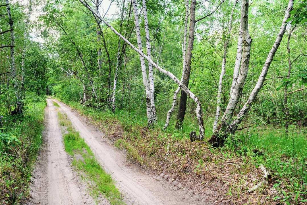 pembukaan wilayah hutan