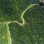 15 Tanaman Perkebunan Bernilai Tinggi