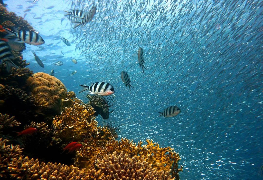 terumbu karang habitat ikan