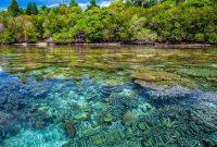 terumbu karang mangrove