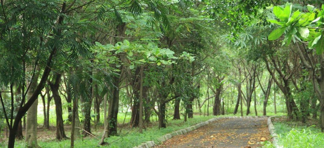hutan kota kemayoran
