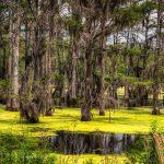 Hutan Rawa – Pengertian, Ciri, Jenis, Vegetasi & Sebaran
