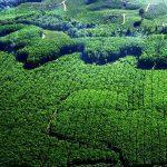Hutan Tanaman Industri - Pengertian & Perkembangan di Indonesia