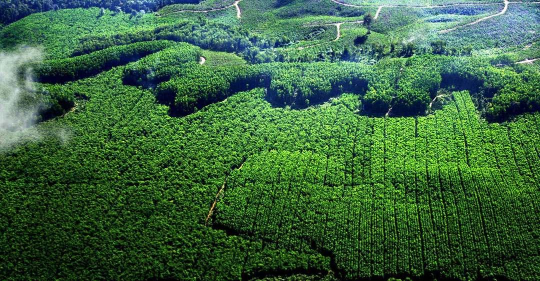 hutan tanaman industri