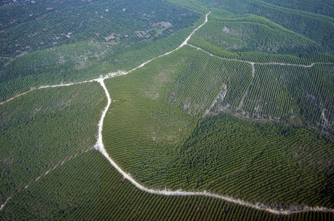 tanaman industri perkebunan