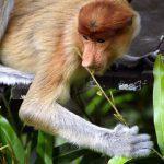 Daftar Hewan Endemik Indonesia (Lengkap)