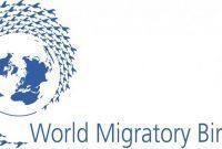 hari migrasi burung sedunia