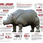 Infografis - Kenali Badak Jawa