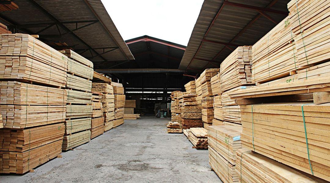 kayu meranti