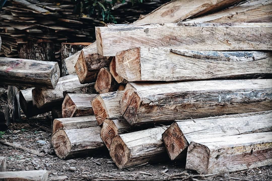 kayu sungai