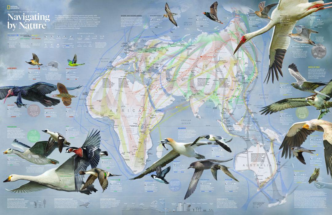 peta migrasi burung